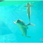 イベント色々楽しい水族館、海響館へお出かけしよ♪ その2 イルカとアシカが凄いっ!